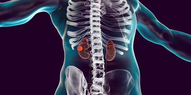 Organ Tubuh Pendukung Sistem Ekskresi