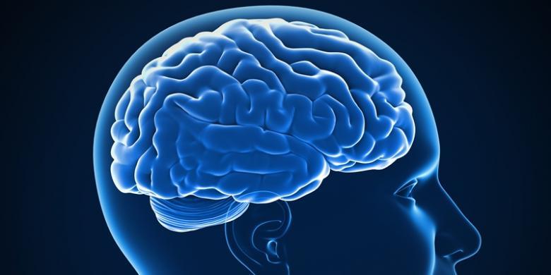 Apa Saja Aktivitas Otak Anda Saat Tertidur